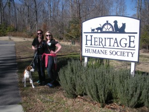 My social sorority volunteers a few Saturdays a semester at the Heritage Humane Society in Williamsburg.  My roommate and sorority sister, Amanda, and I got to walk some dogs on a warm, January Saturday!