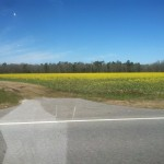Field of Flowers in South Carolina