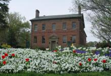 flowers outside of Alumni House