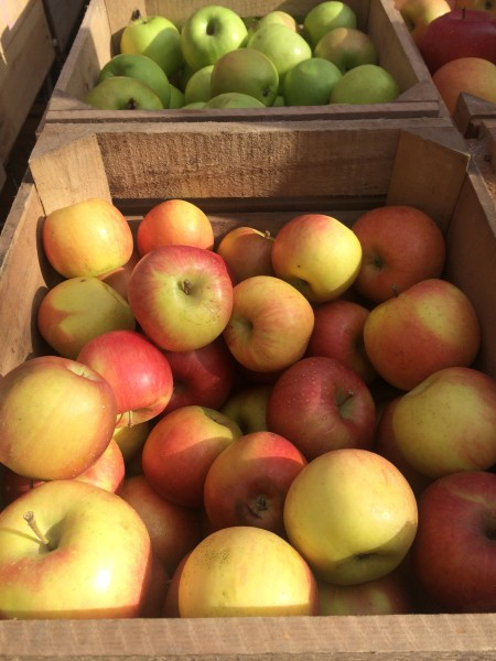 Fresh apples at the Dupont farmers market