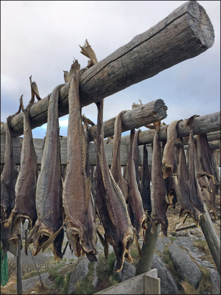 Cod drying on hjell