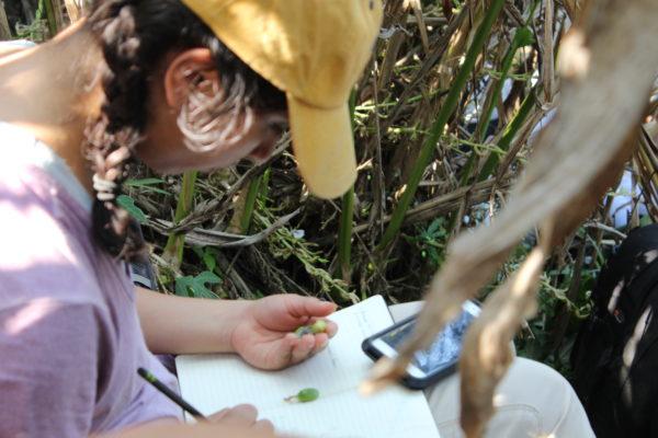 Student Diana Ibarra takes notes while visiting a Guatemalan cardamom farm.