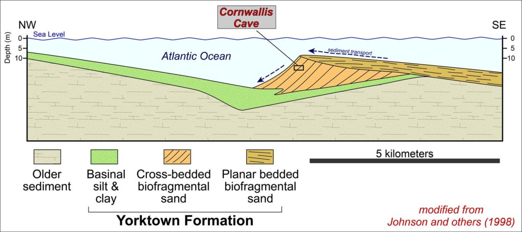 Cross sectional interpretation of depositional environments associated with a submarine shoal during the deposition of the Yorktown Formation (modified from Johnson and others, 1998).