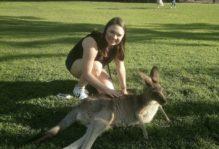 W&M student Dani Greene bending over to pet a resting kangaroo