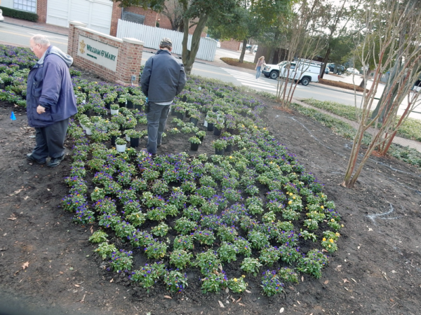 Grounds & Gardens crew laying out the violas in planned sweeping patterns