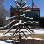 A stark, stemy tree with snow on its branches, and a brick and glass building and flagpole with the American flag flying in the background