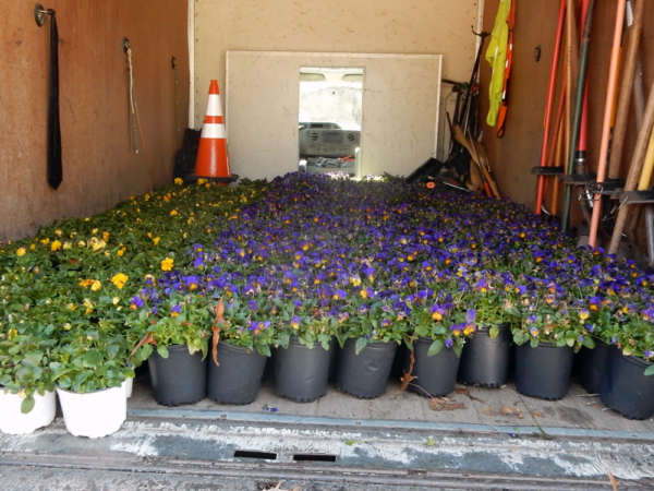 A truck filled with pots of violas and garden tools for the project