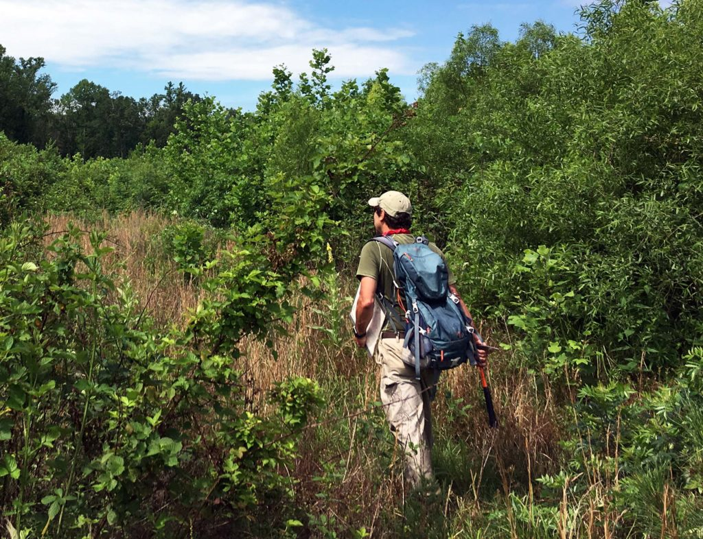 W&M geologist in outdoor gear and backpack hiking through tall brush.