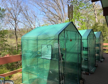 Three green, mesh greenhouses on a back porch with trees in the background without leaves.