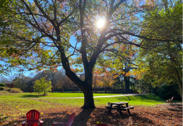 Image of the area between Sadler Center and the Sunken Gardens. The sun peaking through the tree. Lots of green grass and red leaves covering it.