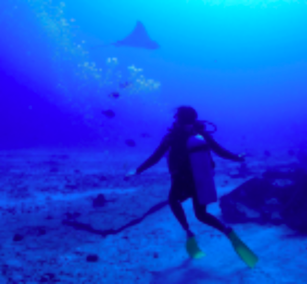 A scuba diver under water near the ocean floor, with bubbles and sea life swimming above.